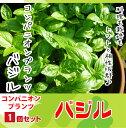【てしまの苗】コンパニオンプランツ バジル 実生苗 9cmポ