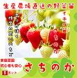 【秋植えイチゴ苗】 さちのか 9cmポット 【人気】
