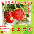 【秋植えイチゴ苗】 とよのか 9cmポット 【人気】