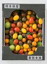 送料無料 【産地直送】熊本県産カラフルトマトミックス 2kgとまとリコピン|14749|