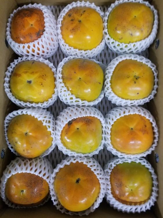 フルーツ・果物, 柿  4L3L
