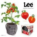 LEE人気のデニムがポットカバーになりました。ハート型のミニトマトが手軽に育てれる栽培セット...