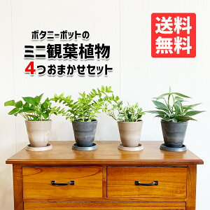 観葉植物セット本物ミニ4鉢セットお試し特価お買い得ボタニ—ポット植えの観葉植物小型小鉢ミニサイズインテリア