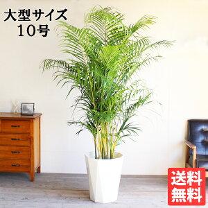 法人宛送料無料アレカヤシヤシの木大サイズ大鉢10号鉢観葉植物ヤシ大型花ガーデンDIY観葉植物インテリア