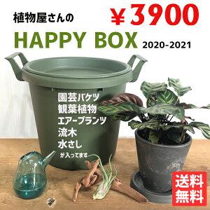 福袋2021植木屋さんのHAPPYBOX観葉植物園芸用品送料無料選りすぐり商品大感謝