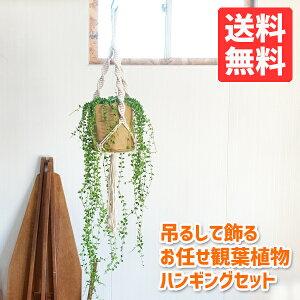 吊るして飾る観葉植物ハンギングお任せセットプラントハンガーコットンクラフト送料無料吊り下げハンギング吊るすマクラメプラントハンギング
