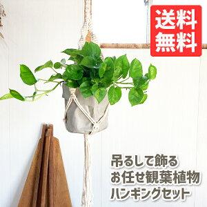 吊るして飾る観葉植物ハンギングお任せセットプラントハンガーコットンアッシュグレー送料無料吊り下げハンギング吊るすマクラメプラントハンギング