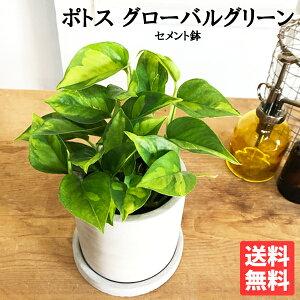 ポトスグローバルグリーンアッシュグレー鉢植えセメント鉢植え観葉植物ミニ卓上セメントポット丈夫で簡単送料無料