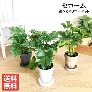 セローム選べる鉢カラーボタニーポットフィロデンドロン新素材自宅用ギフト送料無料観葉植物セロウム