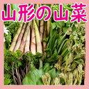 【母の日】【おまかせ天然 山菜 セット1.5kg 送料無料】...