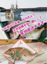 お食い初め料理鯛祝い鯛