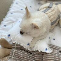ルイスドッグlouisdogSummerDreamPillow(ベージュストライプ)【小型犬枕クッションセレブ】