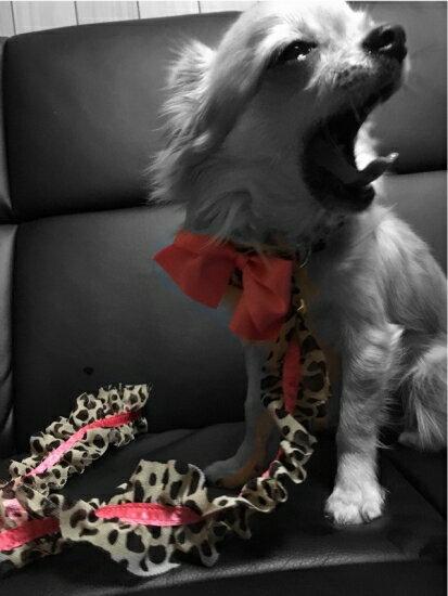 minttan(ミントタン) フリルリボン レオパード 一体型チョークリード【小型犬 ラグジュアリー セレブ リード/】