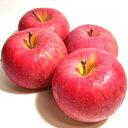 ふじりんご 約5kg 大玉 14〜16個入り 青森産 CA貯蔵りんご●店長おすすめ果物です アップル 林檎 リンゴ