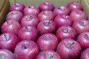 お試し送料込み 林檎のふるさと藤崎町マル組リンゴ園のサンフジりんご「わけあり特価」ノーワ...