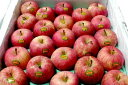 青森産「いかりりんご」 超新鮮!「ふじりんご」 10kg (小玉46個入り)〔店長おすすめ果物です〕リンゴ専用冷蔵庫保蔵で、夏でも旬の美味しさが楽しめます ノーワックス/ふじりんご