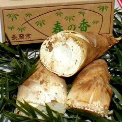 春の京野菜 京筍!エグミが少なく肉厚で軟らかい 京都ではたけのこを食べないと春を感じないと...