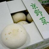 「京野菜」聖護院かぶ(しょうごいんかぶ)2Lサイズ 4玉 京都産|カブラ 蕪 冬の京やさい