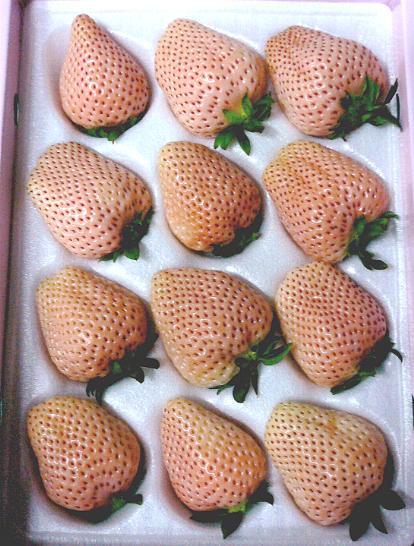福岡産 淡雪(あわゆき)イチゴ大粒 12個前後入り