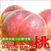 山梨産「加納岩(かのいわ)果樹園」の桃(もも/モモ)桃 5kg 大玉13個入り 高級桃 贈答品 ギフト白鳳 桃 白桃系 ピュアな甘い果汁がいっぱい。みずみずしい美味しさを楽しめる桃です! GIFT ※6月下旬ごろからのご発送となります