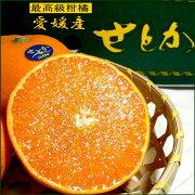 おすすめ オレンジ