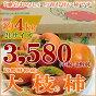 京都大枝特産の柿