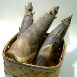 京都産 淡竹 はちくたけのこ 約4kg(6〜10本前後)|タケノコ 筍 竹の子 八竹 破竹