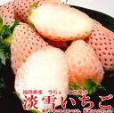 【白いちご】淡雪(あわゆき)イチゴ福岡産 博多 600g12