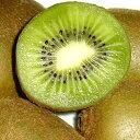 福岡産 キウイフルーツ (緑肉)「キラキラキウイ」小玉 36個入り (110g/1個)毎日のビタミン補給に