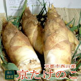京都産 京たけのこ 2kg(2〜5本前後)長い歴史ある春の京野菜 高級竹の子として知られる日本一の誉れの京都西山の名産品です ★出来るだけお届け日指定は御勘弁ください。 京都中央市場より出荷 ●米ぬかつき