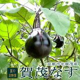 【京野菜】 京都上賀茂産 賀茂ナス(かもなす)大玉 2Lサイズ 5個入り「京都の伝統野菜」「賀茂なす」は、肉質が緻密で煮炊きしても形が崩れません。夏の京やさいの代表です。レシピ付 丸ナス[加茂 鴨 夏野菜]