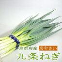 ねぎ 「京野菜」九条ネギ(くじょうねぎ) 6本前後入り 京都