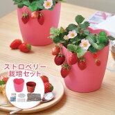 ピンクの花咲くストロベリー栽培セット