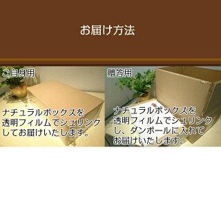 お中元ギフト北海道土産送料無料果物フルーツハスカップジャムコンフィチュール無添加「ハスカップコンフィチュール170g×3本セット」内祝い御祝引出物