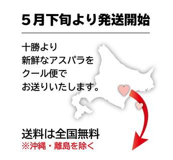 """送料無料北海道十勝産""""朝採り""""アスパラ3kg"""