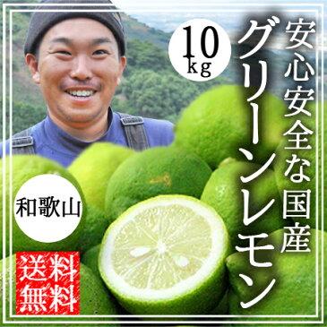 レモン 無農薬 国産 送料無料 10kg グリーンレモン 青レモン 無農薬 和歌山産 有機栽培 農薬不使用 産地直送 オーガニック 自然栽培 無農薬 グリーンジャンクション