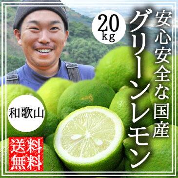 レモン 無農薬 国産 送料無料 20kg 無農薬 グリーンレモン 青レモン 和歌山産 有機栽培 産地直送 オーガニック 農薬不使用 グリーンジャンクション