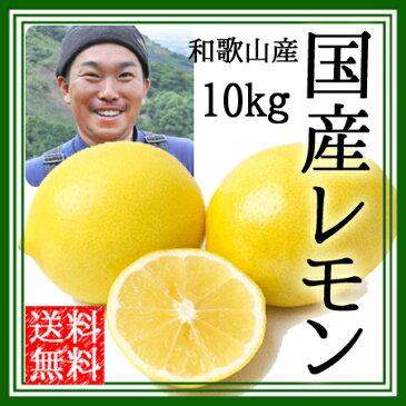 レモン 無農薬 国産 送料無料 10kg ノーワックス 農園直送 和歌山産 有機栽培 産地直送 オーガニック 農薬不使用 グリーンジャンクション