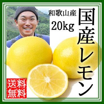 レモン 無農薬 国産 送料無料 20kg ノーワックス 農園直送 和歌山産 有機栽培 産地直送 オーガニック 農薬不使用 グリーンジャンクション