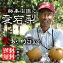 訳あり 梨 5kg【送料無料】愛宕梨 (あたご梨) 家庭用どうぞ【訳アリ】三重産|梨|大きい梨|果物|フルーツ|通販|