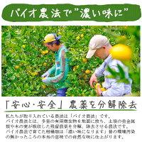 せとか送料無料農園直送愛媛県八幡浜市マルナカ農園