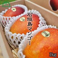 石垣島マンゴー ときわ農園 マンゴー商品画像 1キロ