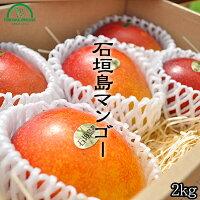 石垣島マンゴー ときわ農園 マンゴー商品画像 2キロ