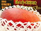 今夏特別限定品徳之島産玉文マンゴー1kg(1玉長短約25cm×約15cm)最高糖度18度数量限定!ご贈答用に最適甘い美味しいトロピカルフルーツ国産南国