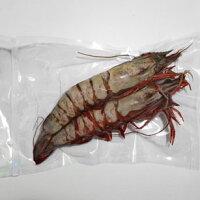 【特大】スーパー・ジャンボ有頭シータイガー海老27〜30cm/尾程2尾真空パック
