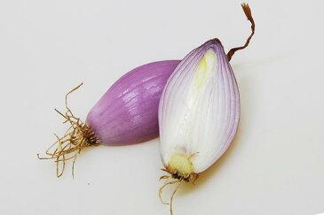 エシャロット フランス野菜 香味野菜 <フランス産>【500g】【冷蔵品】
