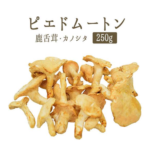 ピエドムートン (カノシタ茸) フレッシュ pieds de mouton <フランス産>【約250g】【常温品】