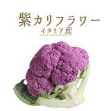 カリフラワー 紫カリフラワー <イタリア産> 【約500-800g】【100g/\280再計算】【冷蔵品】