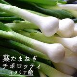 葉たまねぎ チポロット チポロッティ <イタリア産> 【約250g】【冷蔵品】
