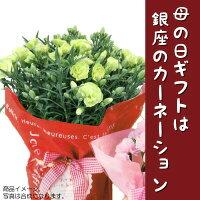 【3月早割】銀座のカーネーション5号鉢母の日ギフト早割母の日限定フラワーギフト2018花鉢Mother's_Day送料無料smtb-s母の日ギフトは銀座東京フラワ